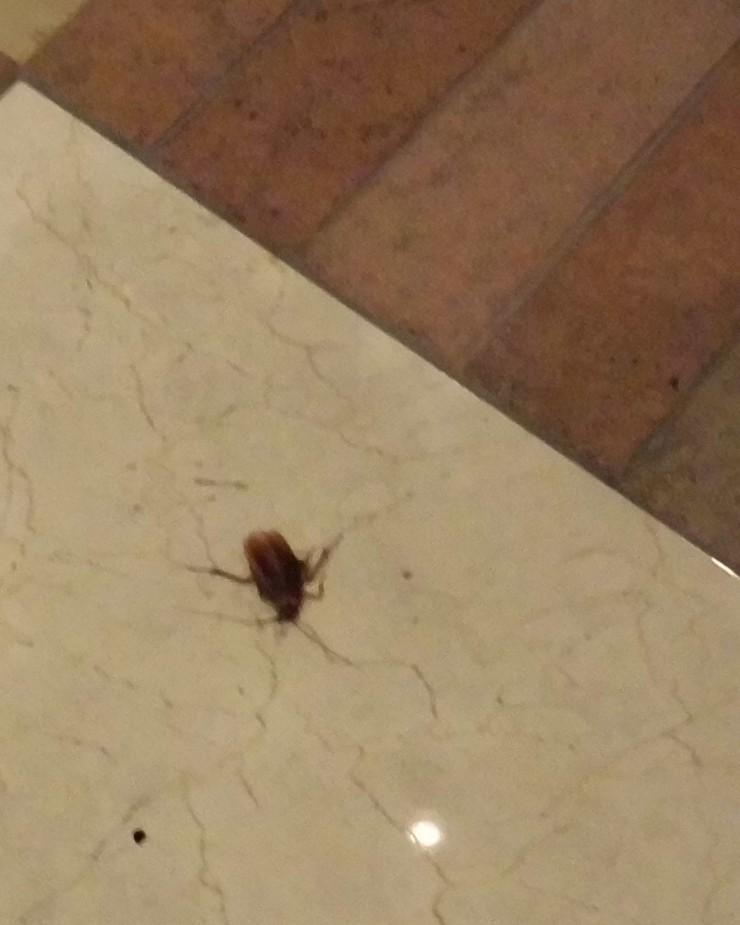 Hote dead-roach