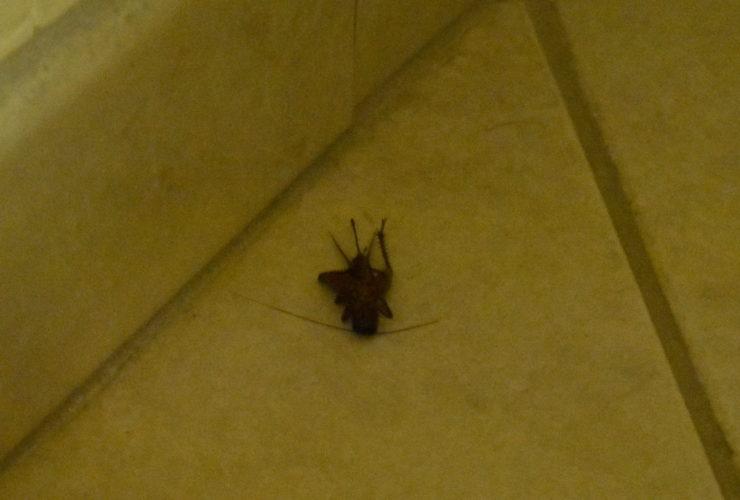 Ann Bug Tucson